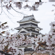 sakura japan 2020